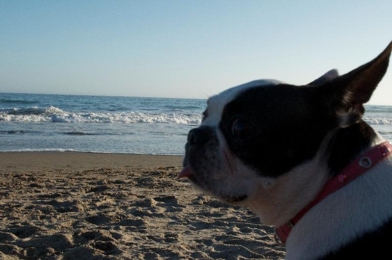 Lil Nosy Parker loves Santa Cruz, Calif.