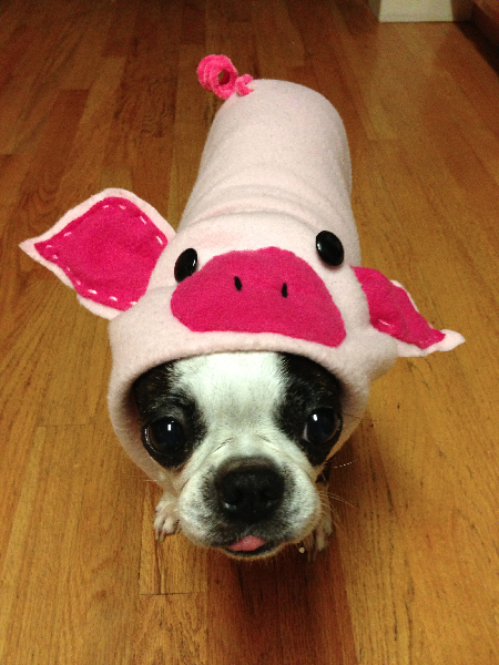 A piglet?! Seriously?