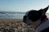 Lil Nosy Parker loves Santa Cruz, Calif.